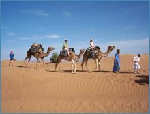 يفضل السياح الوافدون إلى موريتانيا المسالك التي تستخدم فيها الجمال و هو ما يبدو أن يعترضه هذا الإشكال بين الشركة الوسيطة و معظم الجمالين ـ